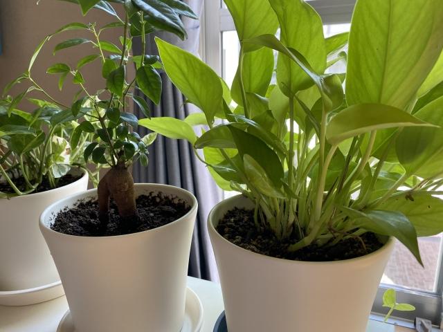 観葉植物たちをお世話することイメージ